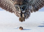 Mind-Blowing Animal Pictures 15